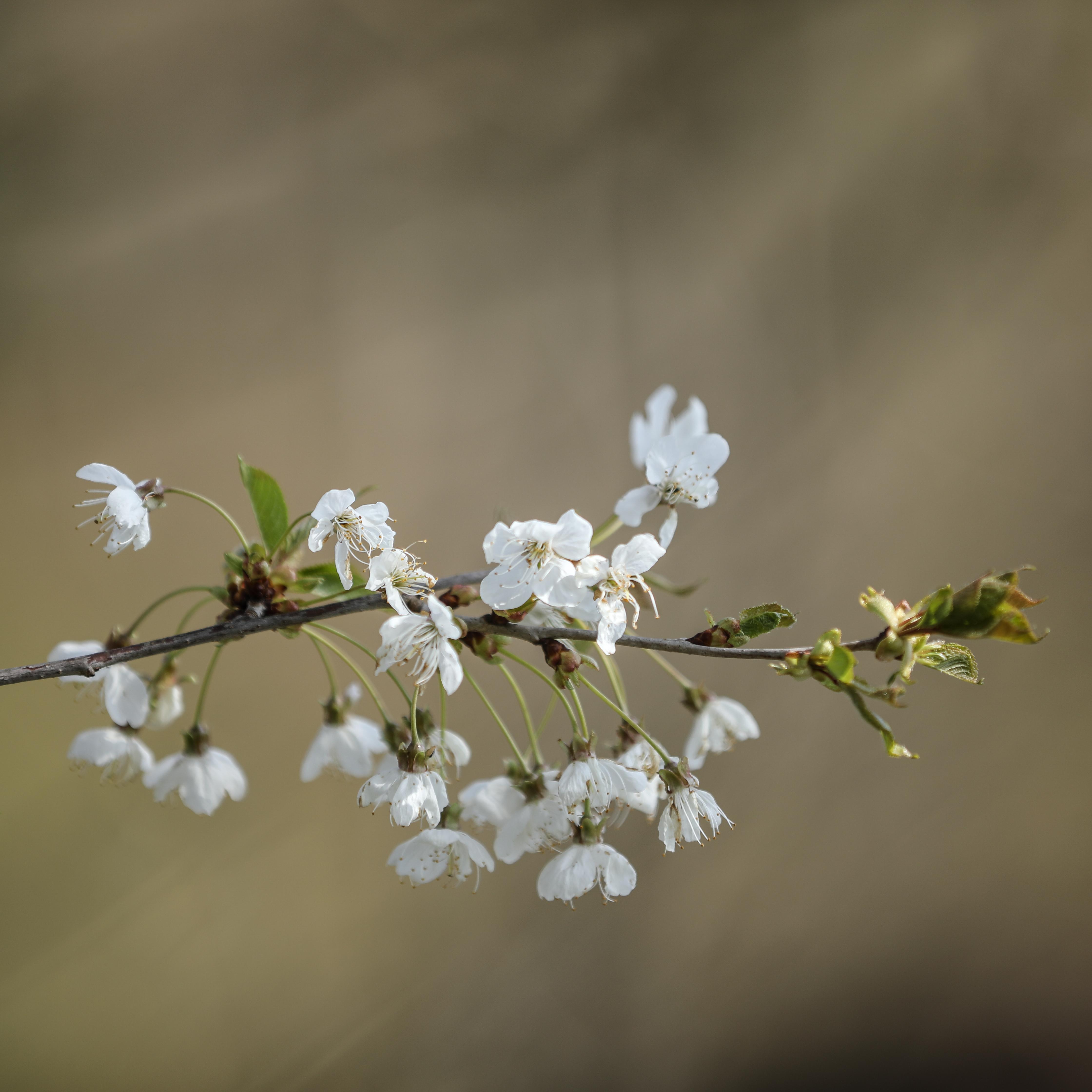 FOTIFABRIK.ch Beitrag: Frühling