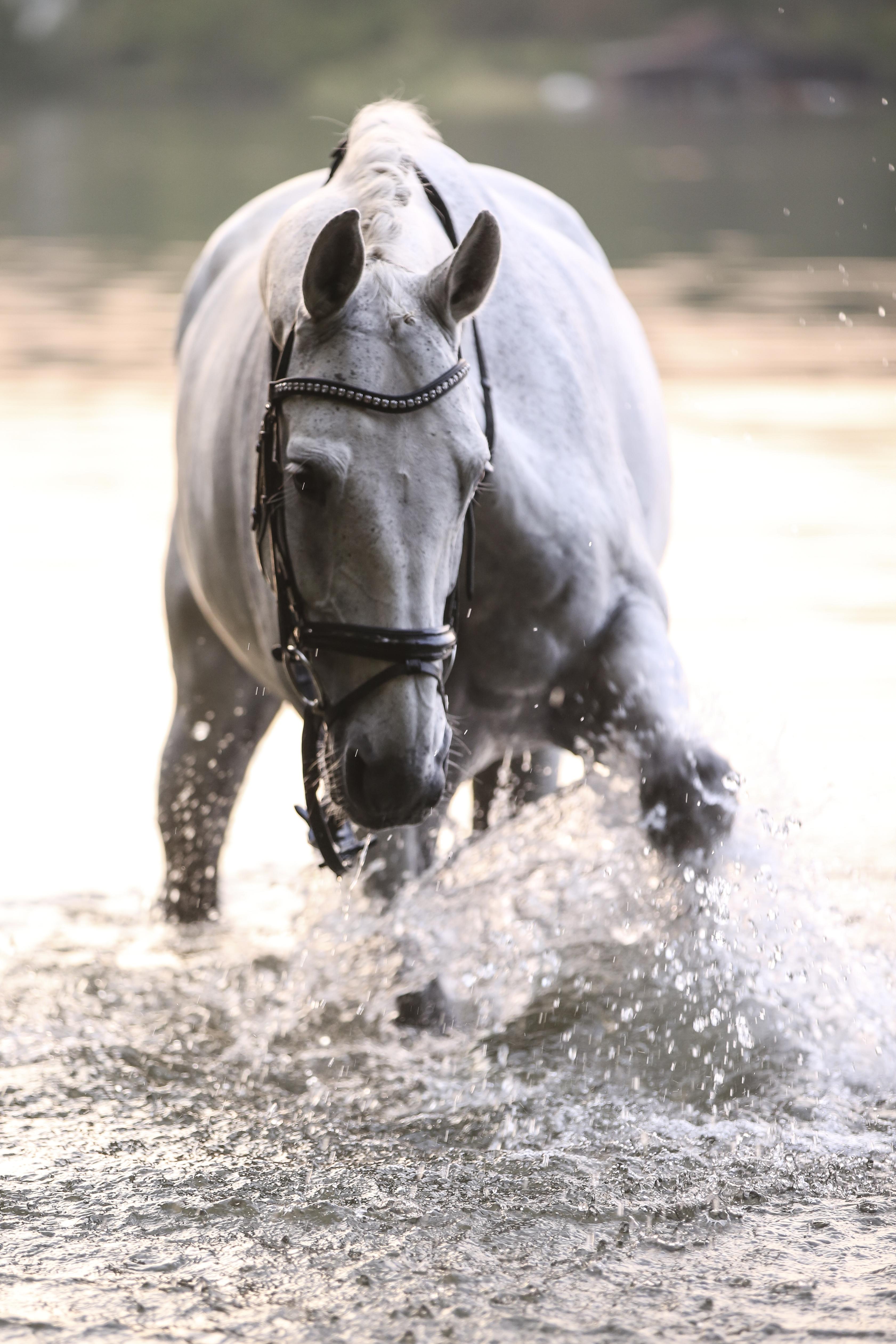 FOTIFABRIK.ch Beitrag: Pferde-Fotoshooting im Wasser